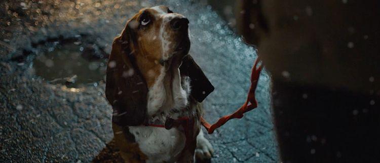 Anuncio Federación de Cardiologia | Oh My Dog